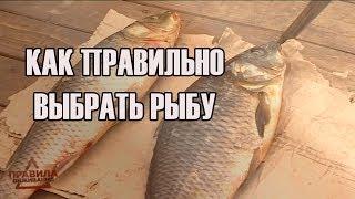 Как правильно выбрать рыбу | Правила выживания | Выпуск 6