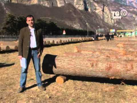 Il fabbricante di una goccia martella Torah