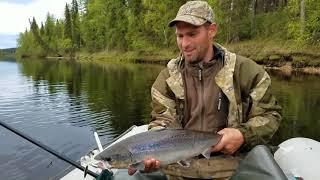 Семга мезень рыбалка