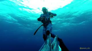 Spearfishing North Carolina Wahoos