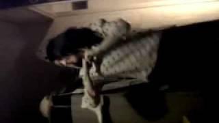 Mama Do The Hump & Inbetweeners Dance