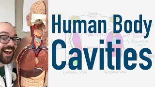 Human Body Cavities - And Torso Model Organ Tour!