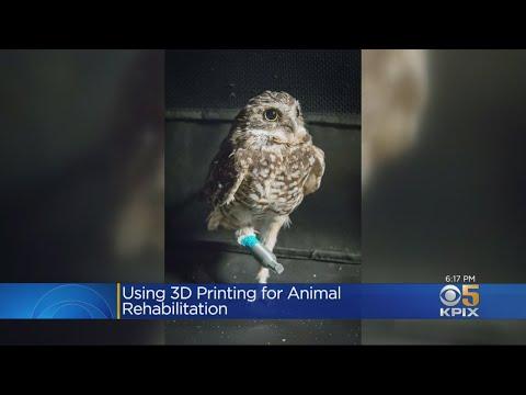 3-D Printed Leg Designed To Help Injured Owl At Walnut Creek Animal Hospital