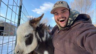 FEEDING My BACKYARD FARM Animals LIVE!!!