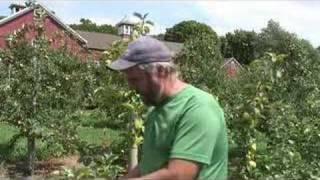 UMass Fruit Advisor: July 20, 2007-Honeycrisp 'yellows'