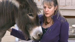 Animal Communicator Sharon Loy Mini Documentary