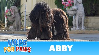 Extremely matted homeless dog wouldn't let anyone touch her for over two years!!!