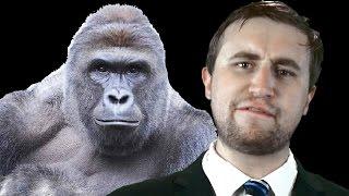 Harambe the Gorilla EXPLAINED