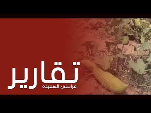 وادي سهام في الحديدة جمال وروعة المكان وخصوبة الانتاج والخيل العربي الاصيل