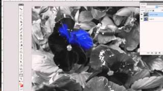 Adding color to Black and White Photos, Photoshop Tricks