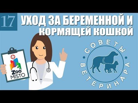 Уход за беременной и кормящей кошкой   Как правильно ухаживать за  кошкой   Советы Ветеринара