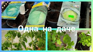 Одна на даче, самоизоляция.Что с рассадой?Посеяла капусту.Отвечаю на вопросы.