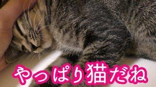 子猫がうちにやって来た 本性を隠しておけなくなった子猫【4日目】