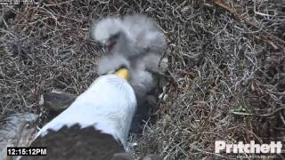 SWFL Eagles ~ Sibling Rivalry ~ 01/29/16