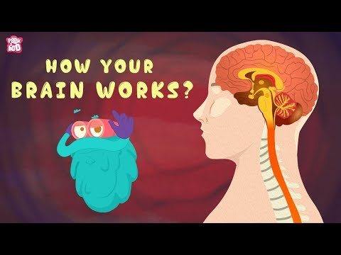 , title : 'How Your Brain Works? - The Dr. Binocs Show | Best Learning Videos For Kids | Peekaboo Kidz