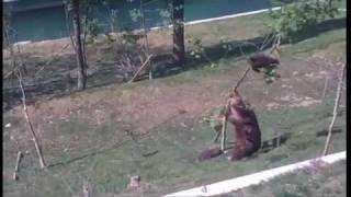Sigur a făcut ceva rău puiul ăsta de urs! :))