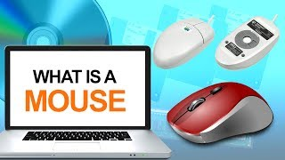 What is a Computer Mouse   Definition & Types of Mouse   How to Use Mouse   Computer Hardware