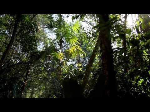 En el Día de la Tierra: ¡A cuidar los ecosistemas de Guatemala!