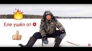 Клев в качканаре свердловская область на две недели