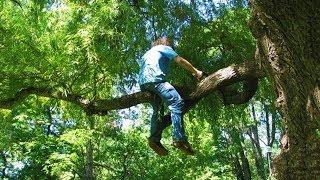 Funniest Tree Cutting Fails