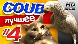 Смотри лучшее - Coub HD #4
