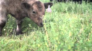 How to Manage for Drought with Grazing