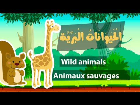Learn arabic (wild animals) – Apprendre l'arabe (animaux sauvages) – أسماء الحيوانات البرية بالعربية