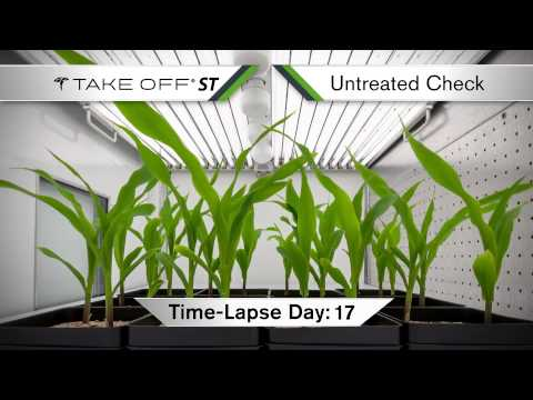 Take Off ST: Seed Treated Corn Time-Lapse