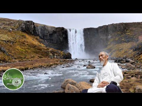 Musica e Sons Passaros na Natureza para Meditar