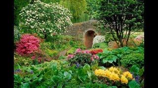 Tend My Garden-Joe Walsh & the James Gang