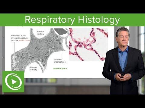 Reteta detoxifiere colon