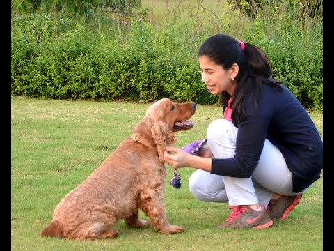 HOW TO BECOME A DOG TRAINER! - YouTube