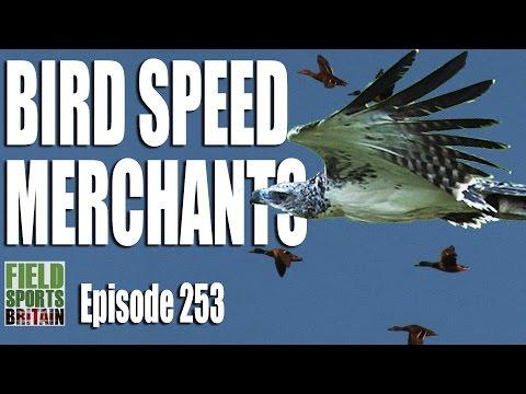 Fieldsports Britain – Bird Speed Merchants