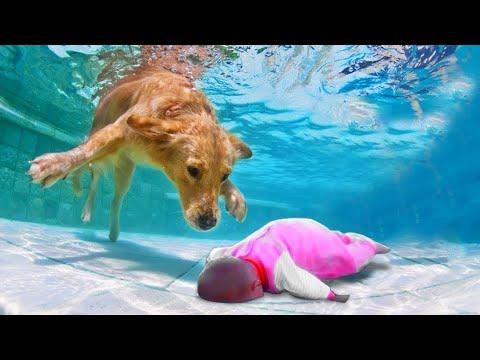 Собака - Герой Спасает Жизнь Ребенку! 10 Невероятных Случаев Снятых На Камеру