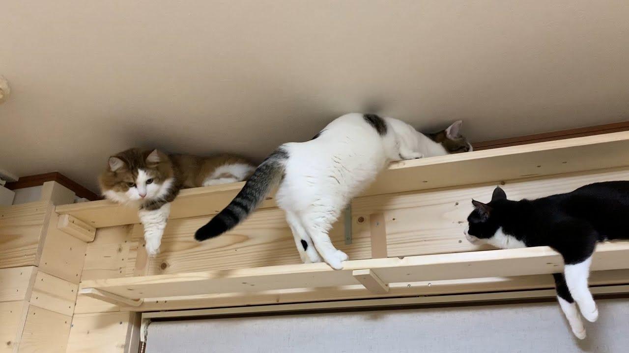 モゾモゾとほふく後進する猫
