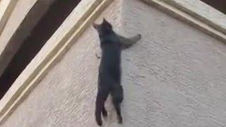 Смотреть онлайн Новая подборка приколов с котами и кошками