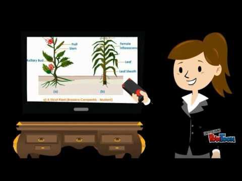 ปรสิตวัชพืช 8 ตัวอักษร
