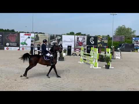 7yr (Catoki x Cornet Obolensky) yh final