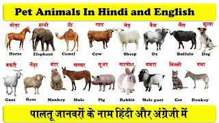 pet animals in english and hindi with pdf  | domestic animals | पालतू जानवरों के नाम |