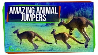 Springs, Bows, and Gears: Amazing Animal Jumpers