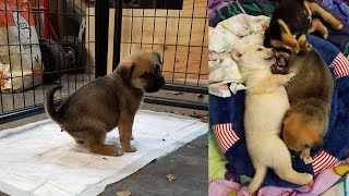 Stop Buying Puppy Pads! Build a Low-Maintenance Puppy Pen (4-Week Old Puppies)
