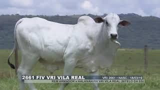 FIV VRI Vila Real VRI 2661