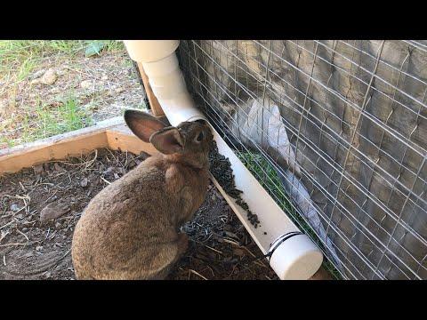 , title : 'Best Rabbit Feeder
