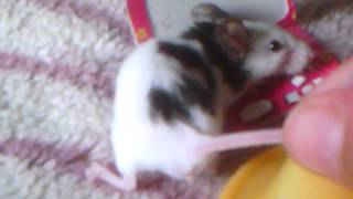 "Мышка мама и приколы "" Табиль малютки"""