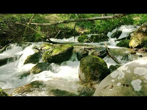 sons da natureza para relaxar - sons da natureza para relaxar a mente e acalmar sons da natureza