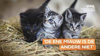 Bedrijf lanceert kattenapp: 'Hierdoor weet je beter of hij honger heeft of gewoon wil spelen'