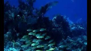Tanzwut - Meer