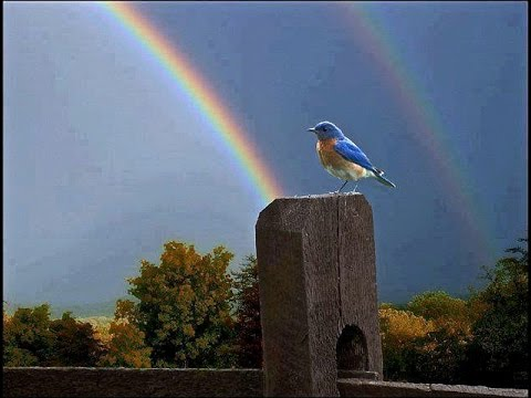 Titel: Somewhere Over The Rainbow What A W
