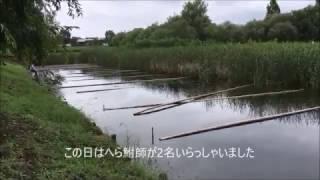 群馬県邑楽町幸の池KolamSachinoike,GunmaJepang