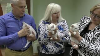 Клуб малочисленных пород кошек ПРЕСТИЖ системы PCA